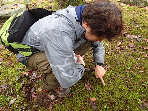 この苔の生えた地面から頭を出しているらしい。