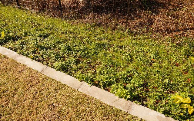 芝生の脇の雑草の上に