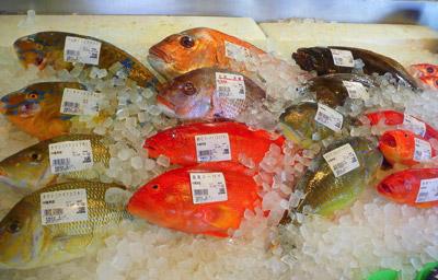 沖縄といえば、サンゴ礁に棲むカラフルな海水魚!…だが、淡水域には歓迎されざる外来魚も多く生息している。