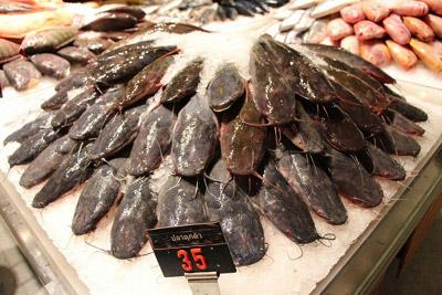 クララことウォーキングキャットフィッシュの仲間は本来こういう暗い色合いの魚なのだが…。(バンコクにて撮影)