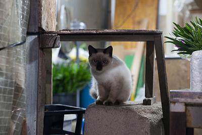 農連市場に住み着いていた猫たちも、新しい住処を見つけているといいのだが