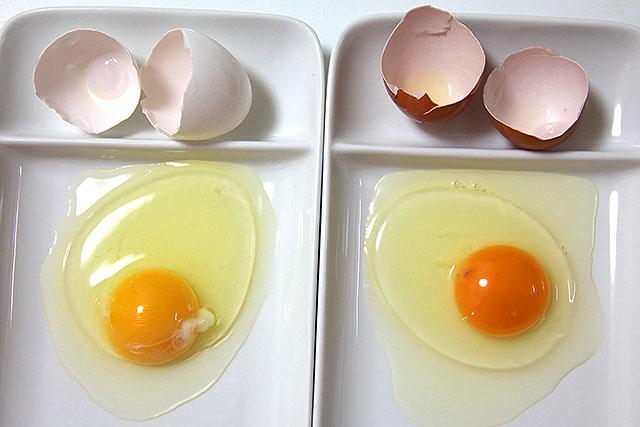 右が旨味賛卵。黄身の色が濃くてオレンジ色。