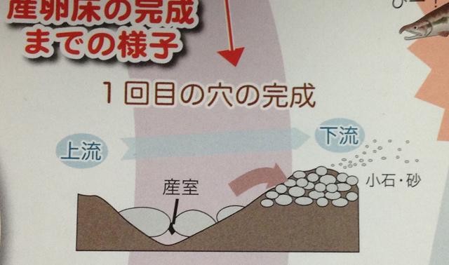 すりばち状に穴を堀り、大きな石を下に落として産室を作る。