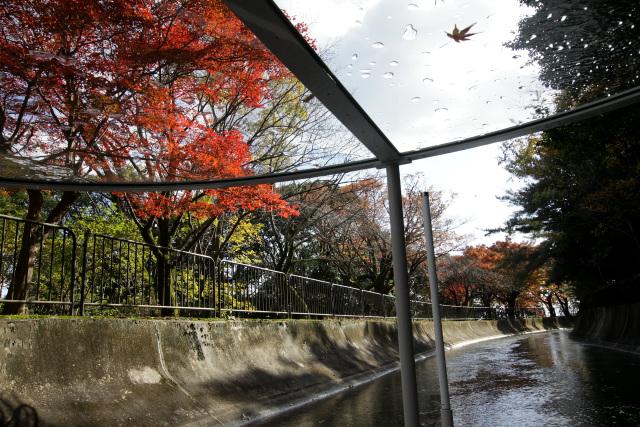 この辺りは紅葉が非常に美しい