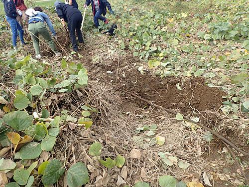 掘っても掘っても、同じ太さで横に伸びていく罠。