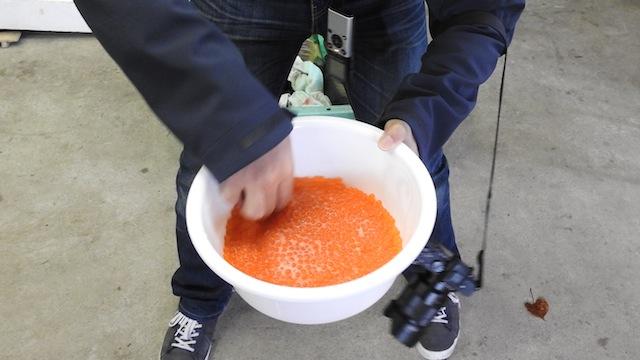 手が濡れていないのを確認してから卵と精子をよくかき混ぜる。とにかく水が御法度。