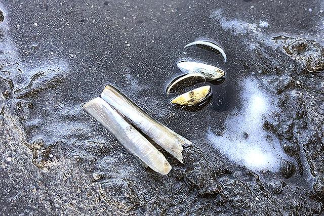 マテ貝の貝殻があったのでいるにはいるはずだけど。減ったのか場所が悪かったのか。
