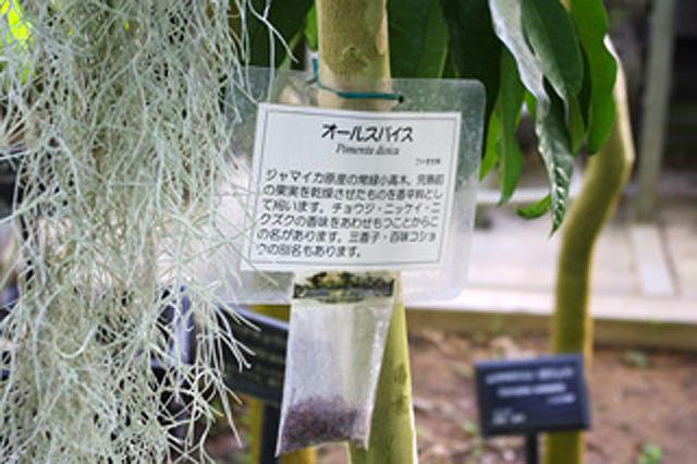 偶然、近所の植物園で展示していた。ジャマイカ原産。
