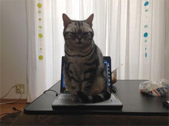 安藤さんちのネコもキーボードに乗る。国語辞典の「鎮座」の項目に貼りたいくらいの写真