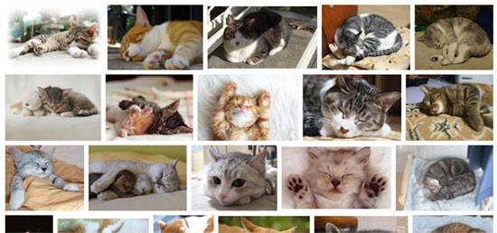 画像検索で「ネコ 寝てる」で検索したところ
