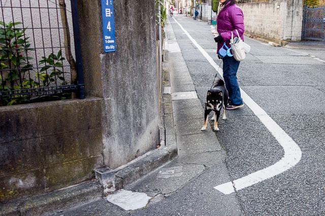 犬のお腹を散歩する犬。