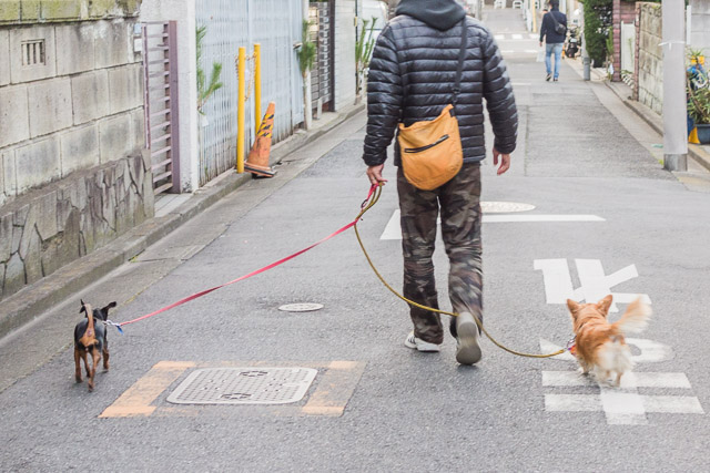 前足を散歩する犬。
