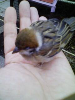 「手のひらで小鳥が寝てしまったため、ゆっくりと慎重に行かせていただきます」(megaya)
