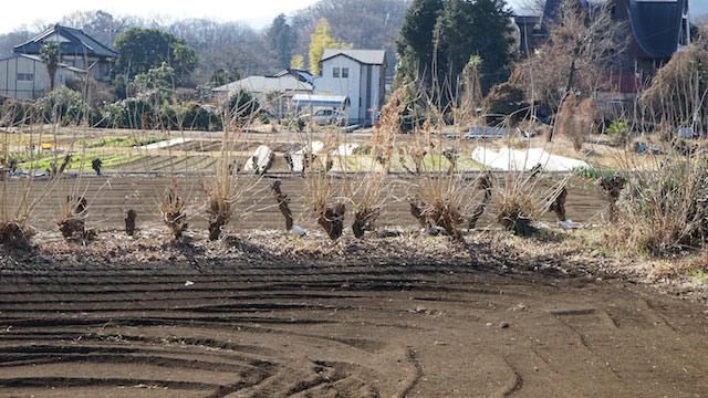 畑の周囲に植えられた桑の木は見かける。このあたり(相模原市周辺)では防風などの目的でこのように植えられた桑を「マワリックワ」と呼ぶらしい。