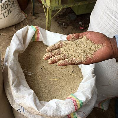 インジェラの材料であるテフの粉末。