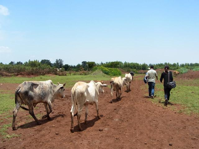 バルバレ、アフリカの大地っぽいね。