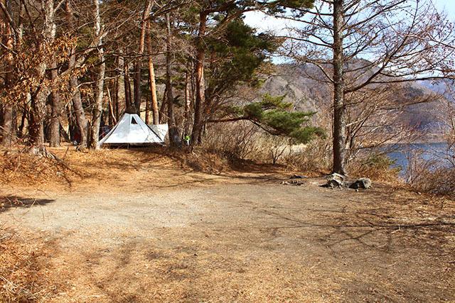 森エリアは平らな場所が多く、テントを張りやすい。