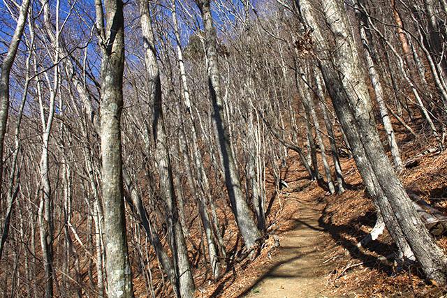 普通に登山道。