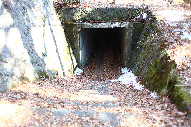 車道の下を通るトンネル。この先が樹海です。