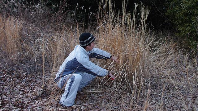 陸地の枯れ草は信用できる。