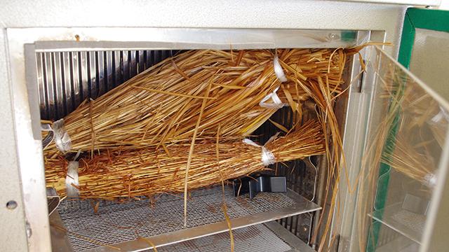 3つのわらづとを詰めて、40℃、加湿環境で24時間発酵。