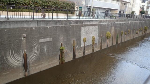 赤瀬川原平いうところの植物ワイパーがみえる白子川