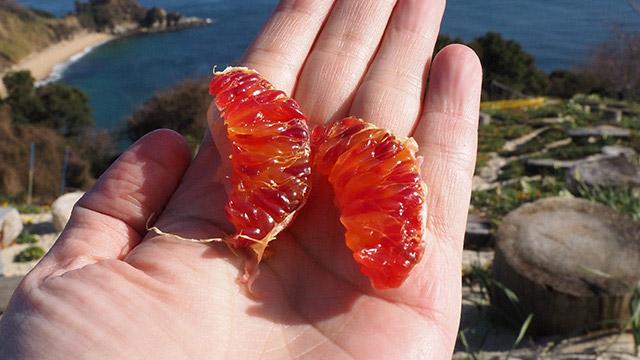 小腹がすいたので苺大福と、「ひめルビー」という不思議な色のみかんを食べる。最高!