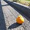 松山には道路にみかんが転がっている島がある〜地元の人頼りの旅 in 愛媛県松山市〜