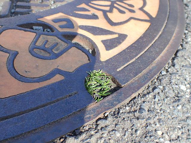 川崎の地面のデザイン全般かわいい。
