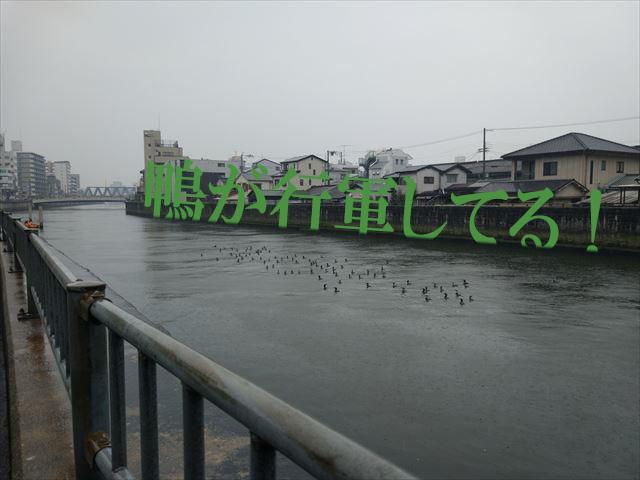 これは意識せずになんとなく水路の縁に合わせた写真