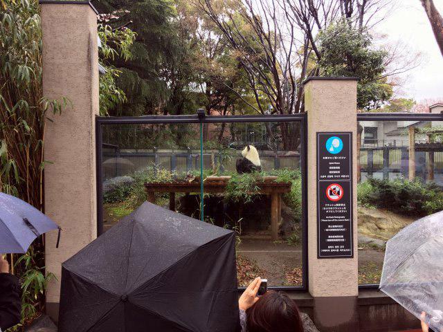 上野動物園ではシャンシャン(要予約)を見ることができなかったが、オスのリーリーはいた。後ろを向いて笹を食べている