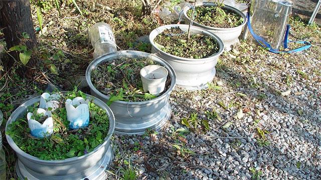 ホイールを再利用した花壇。生えてる草が周囲の草と変わらない