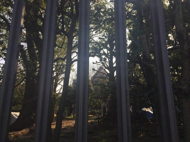 周りの雑木林越しに写真を撮ったら完全に古代遺跡のような趣になった。