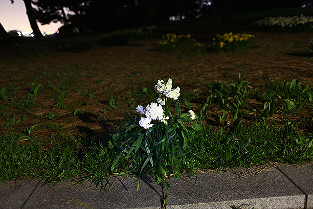 公園の道端に咲く花。