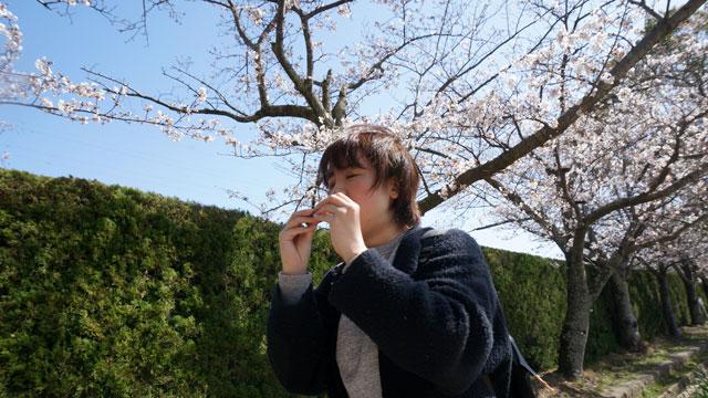 桜の木の下で優雅に食べている、ように見えるが取引先から電話がかかってきて大変そうだった