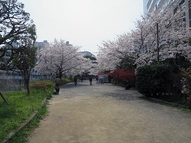その先の線路跡は広い遊歩道となっていた