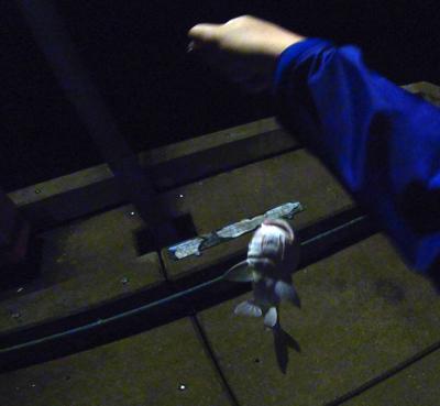 いやー、嬉しかったね。釣れると思ってなかったけど。