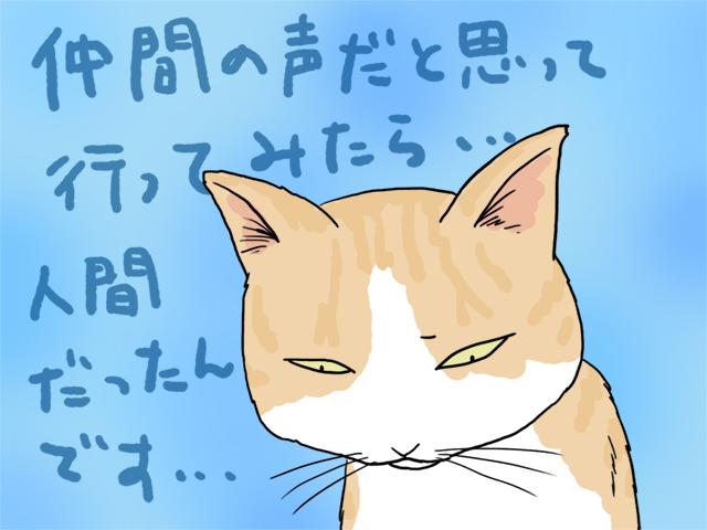 次回、猫からの投稿もまってます