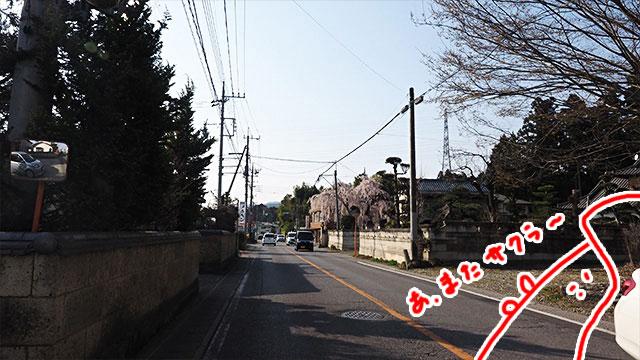 バイクを走らせてると、家々の間からよく桜が見える事に気づく。高い建物が少ないので桜が目にとまりやすいのだ。