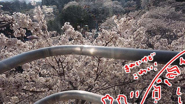 桜に突っ込んでるところ。余裕はないもののあの世のようにキレイだった。乗るならバランス取れるように2人がいいかも?