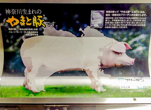 """「神奈川県って """"やまと豚"""" に似ているね」だそうだ。なぜ実写にした。イラストの方が似せることができたのでは。"""