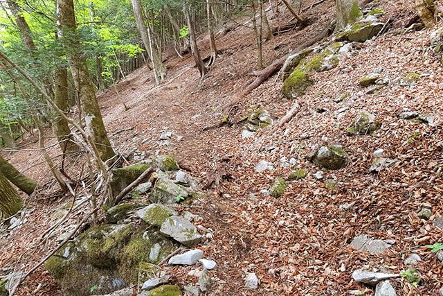この辺はまだ一般登山道と変わりません。