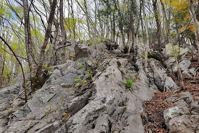 岩稜帯の下は落石があるので注意が必要です。耳を澄ませましょう(そして落ちてきたら避けましょう)。