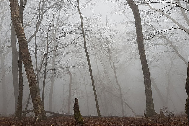 眺望ゼロ。霧の向こうから怪物が出てきてもおかしくないし、熊なら普通に出てきそう。
