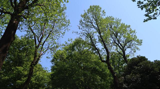 緑と空が見えて癒し効果がすごい。脳が喜んでるの がすぐわかります。