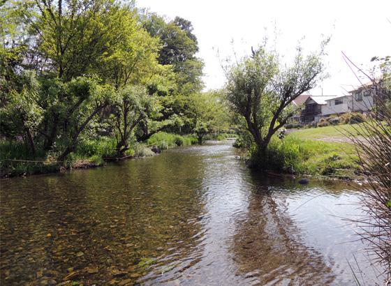 「黒目川」の風景です