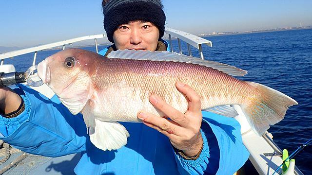 これがシロアマダイという魚です。私も生まれて初めて見ました。