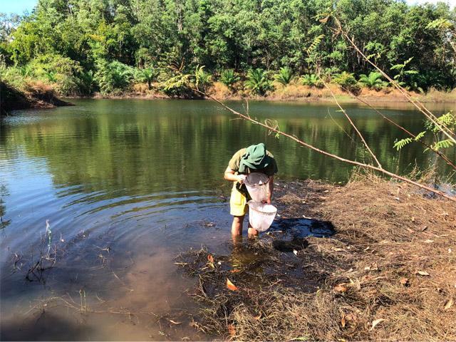 湖の浅瀬やため池に網を入れる。