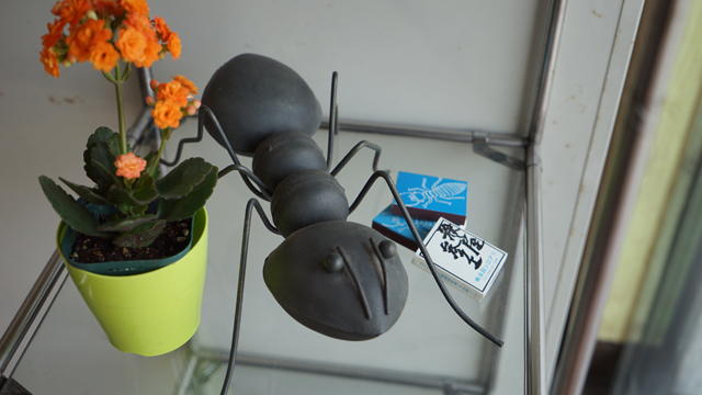 アリ屋画廊!アリだけに!(写真は事務所に飾ってあるアリのオブジェ)「長女がお土産に送ってきたものです。まあ、シロアリはゴキブリの仲間なんですけどね」