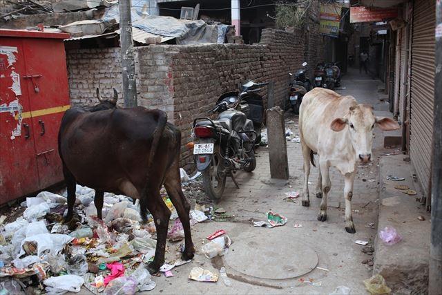 インド写真2、『雰囲気的にバナラシの路地じゃないかなと思います。路上のきたなさ、牛、バイク、とインドを表す要素がうまく入っています』